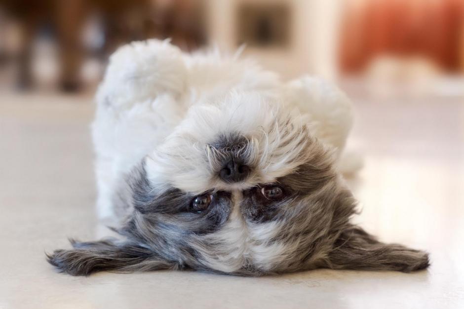 BPSOP-Pet-Photo