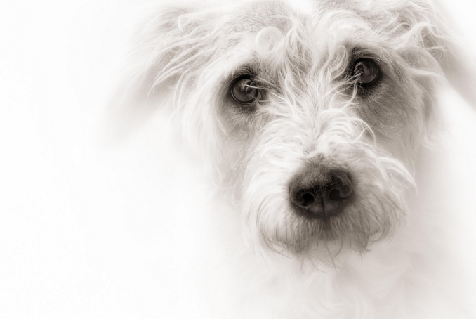 Dog-Photography-online