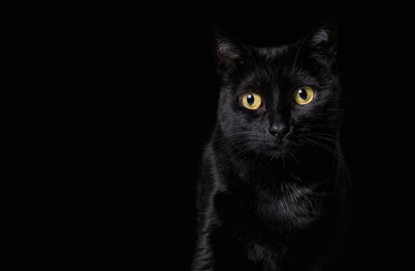 Online-Pet-Photography-Class