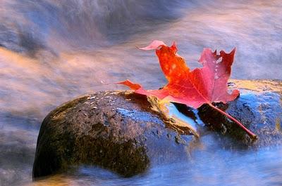 Fall_colorful