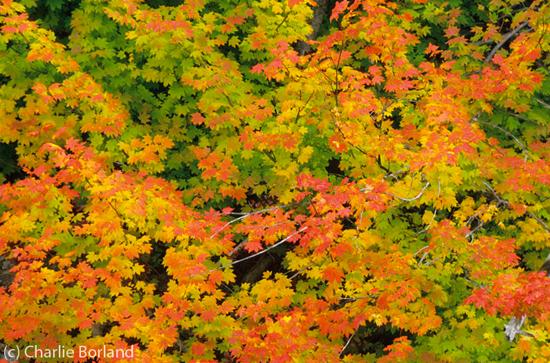 leaves_fall