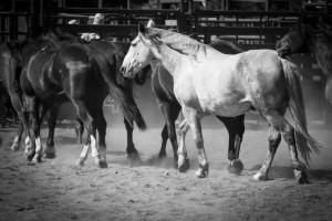"""""""White Stallion"""" By: Lynn Ronan"""