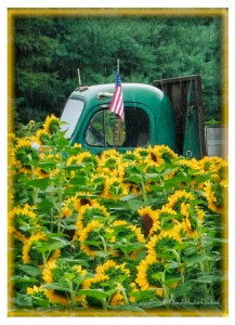 2-sunflowers-rain-american-flag