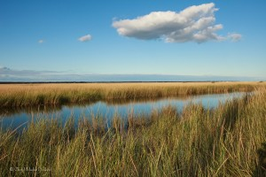 5-naples-yellow-marsh-cloud