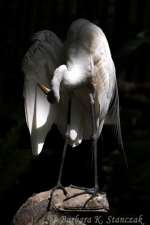 """Beak to Beak"" By: Barbara Stanczak"