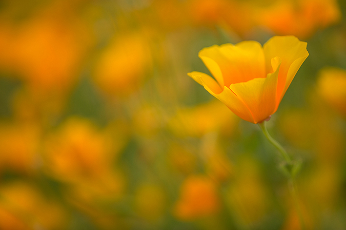 capturing the beauty of flowers
