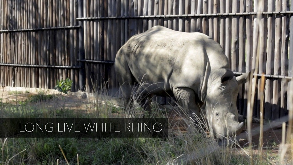 long_live_white_rhino01