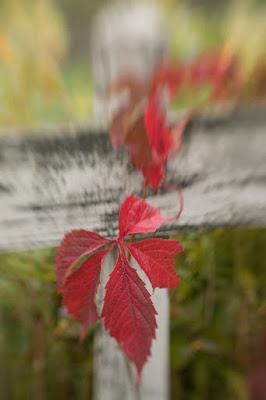 Autumn leaves SW80 v web