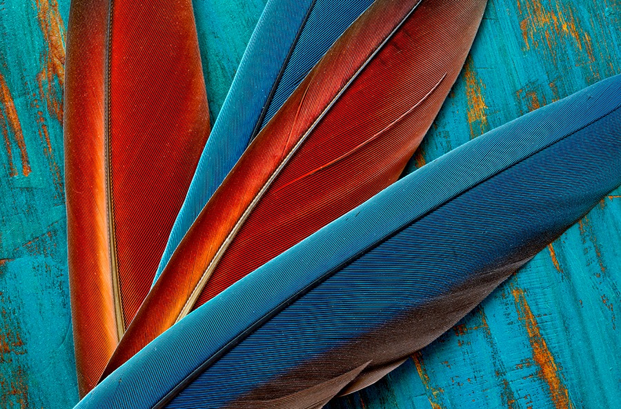 Parrot_Feathers_&_Rustic_BG_Drager