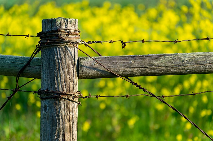 Spring_Countryscape_Drager