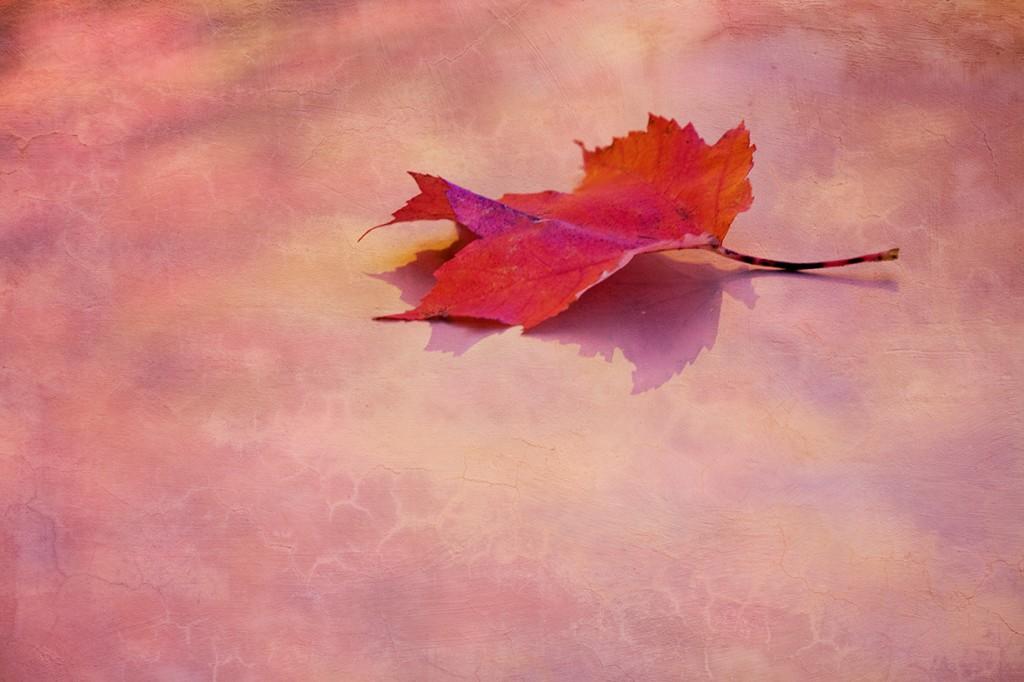pastel leaf w texture Clemons