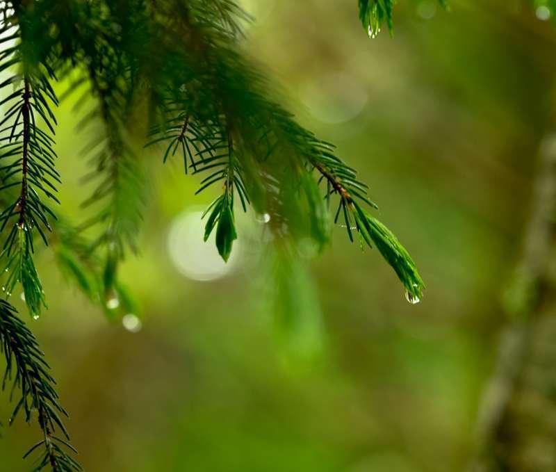 Ann Fitzsimmons_Photographing-Flora-Green