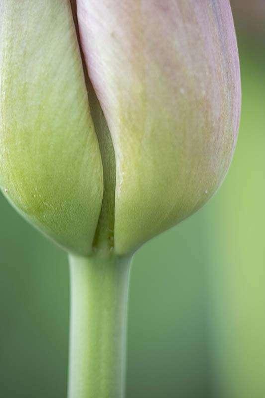 Pam Corckran_Photographing-Flora-Green